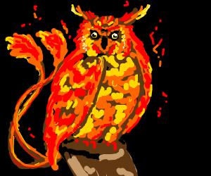 pheonix meets owl