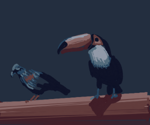 Two ducks/pigeons/toucan