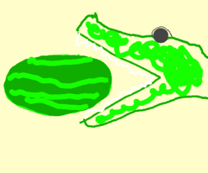 alligator eats a watermelon