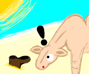 a camel finds a boot in the desert