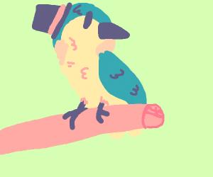 Fancy bird on a branch