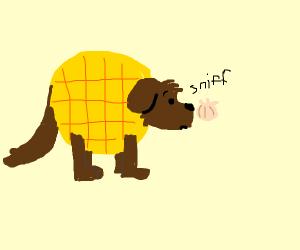 Waffle Dog Sniffs an Onion