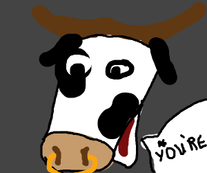 Cow with nose ring correcting your grammar