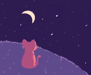 A Cute Kitty watching Shooting stars