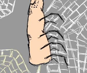 thumb spider
