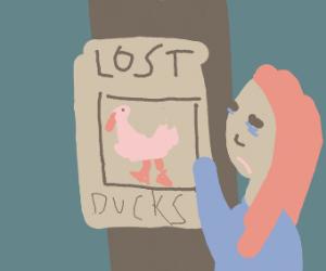 I lost my ducks