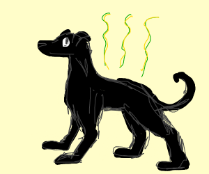 Smelly black dog