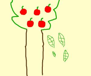 Leaf falls off apple tree