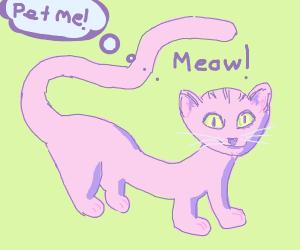 extra long cat begs