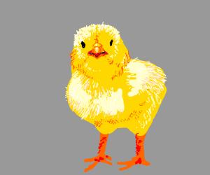 fat cute chick