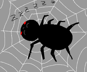 Spider sleeping happily