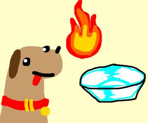Pet Hot Dish
