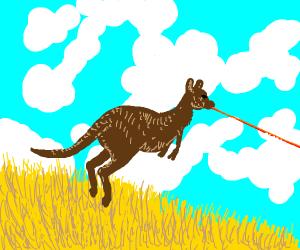 Kangaroo spits lazer