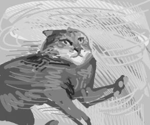 Cat in a tornado