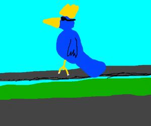 king rail bird