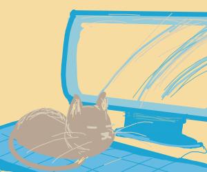 Annoying cat sitting on keyboard
