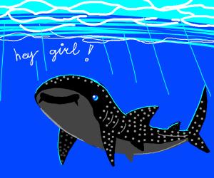 Flirty Whale Shark