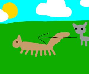 Grey cat chases multi-legged squirrel