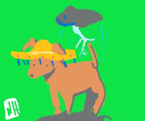 Mexican Lighting Dog