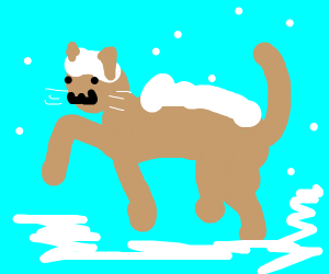 Cat covered in snow