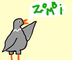 pigeon saying 'zombi'