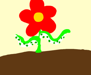 Flower with galactic arms??