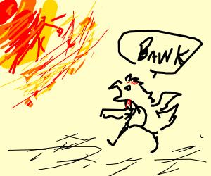 Chicken attacks the sun