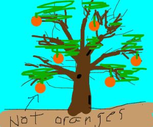 pumkin tree