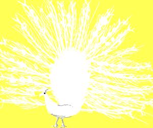 Snow Peacock