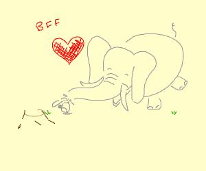 elephant pets rabbit with trunk