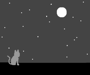 kitty gets to watch the night sky