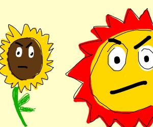 Sunflower facing the SUN