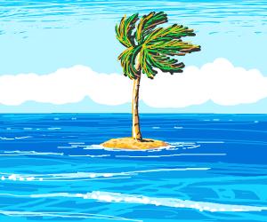 tiny island with 1 single palm tree