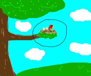 bird's nest on a tree branch