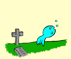 ghost goldfish looks back at ts grave