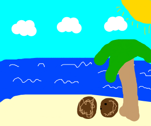 coconuts look at the ocean in the beach