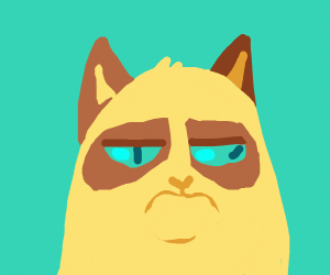Derpy angry cat