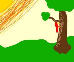 Woodpecker pecking a tree