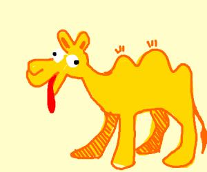 Dumb camel