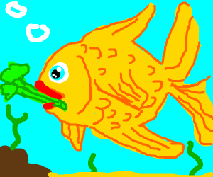 goldfish eats celery