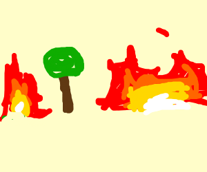 everything is on fire except the tree