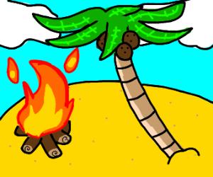 campfire next to a palm tree