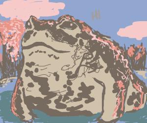 Toad Says Hi!