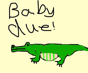 Pregnant Alligator
