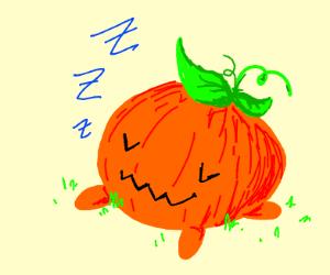 Pumpkin from SU resting