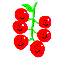 A group of happy tomatoes