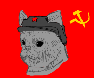 Communist French bulldog