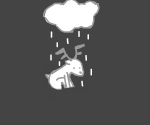 cute deer in rain