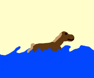 A horse swimming