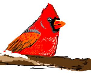 A male cardinal (bird)
